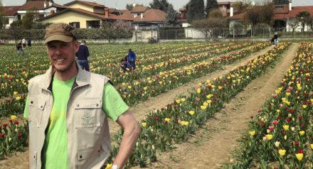 Tulipani italiani 2018 a Cornaredo: ultimi giorni per ammirare i tulipani