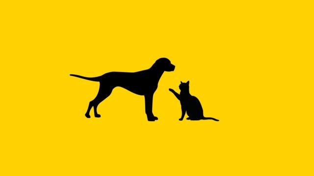 https://www.dotmug.net/wp-content/uploads/2020/01/dogcat-640x360.jpg